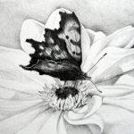 vlinder-small